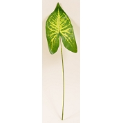 FEUILLE ALOCASIA LONG