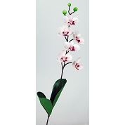 PHALAENOPSIS MINI ROSE 47CM