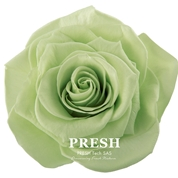 ROSE STABILISEE INES LIME Ø 4 CM (X9)