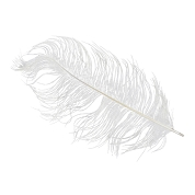 PLUMES BLANCHES 20CM X 10