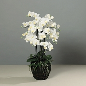 ORCHIDEE BLANCHE 97CM